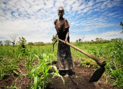 Image: woman tilling field with hoe
