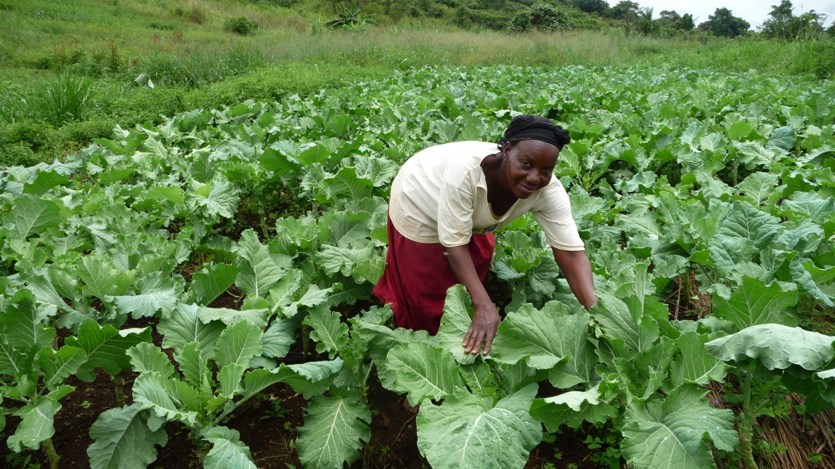 Picture: Hoima farmer, Sayuni, tending cabbages