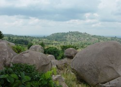 Part of Agricultural Land filled with rocks. Photo from Healthy Land